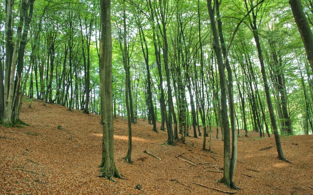 Galerie Brochterbecker Wald
