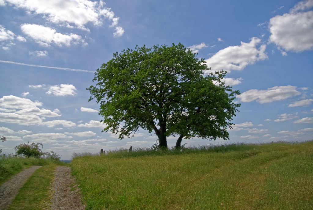 Der Baum 3