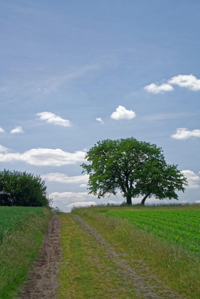 Der Baum 2