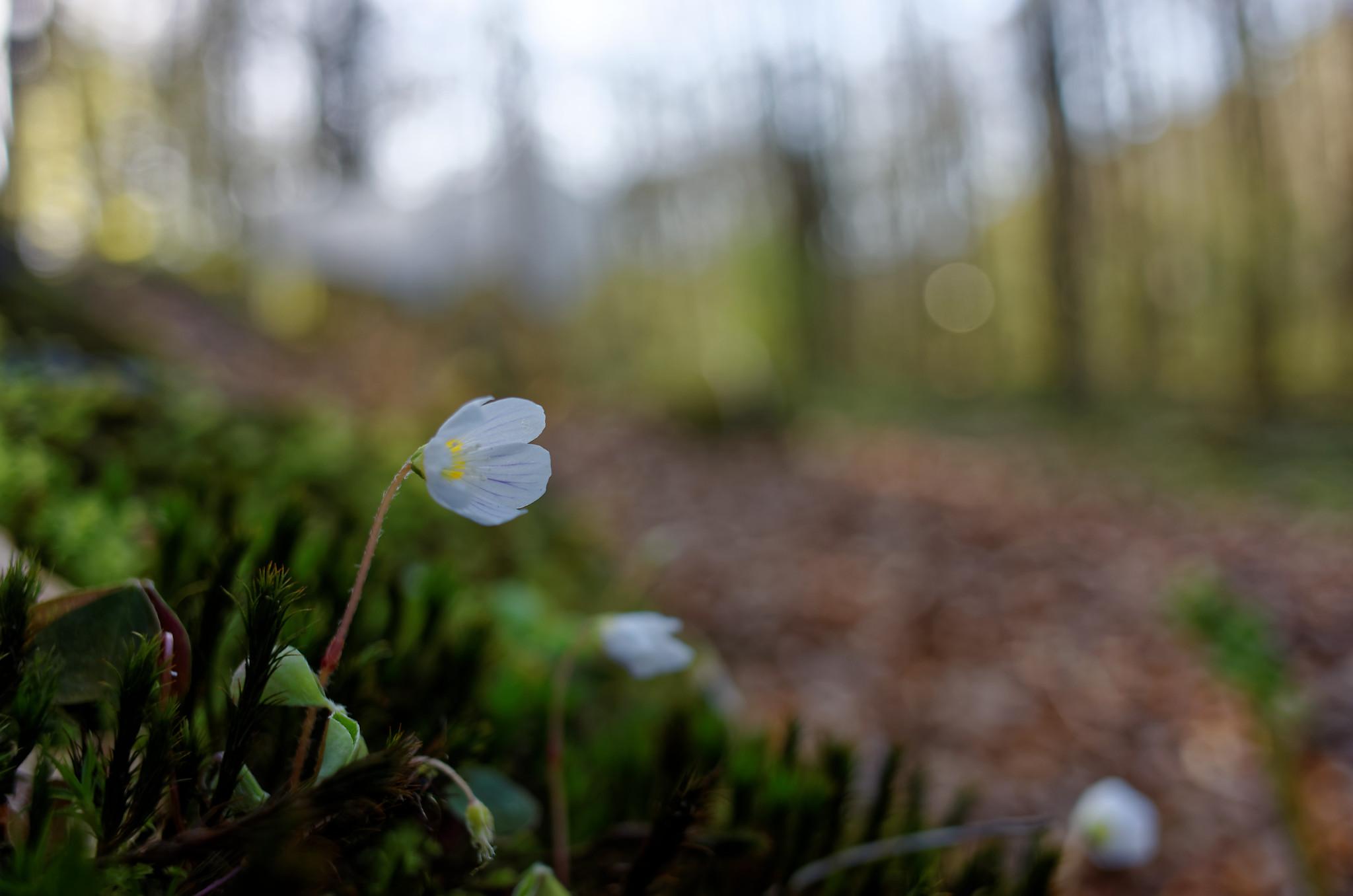 Eine zarte Blume
