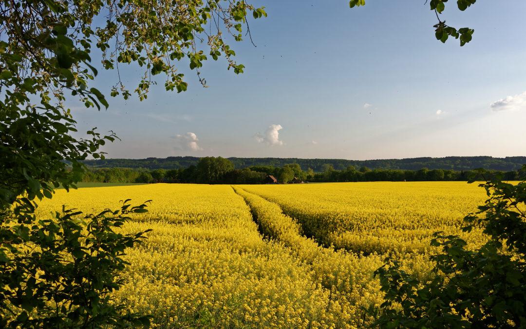 Gelb, wohin man sieht
