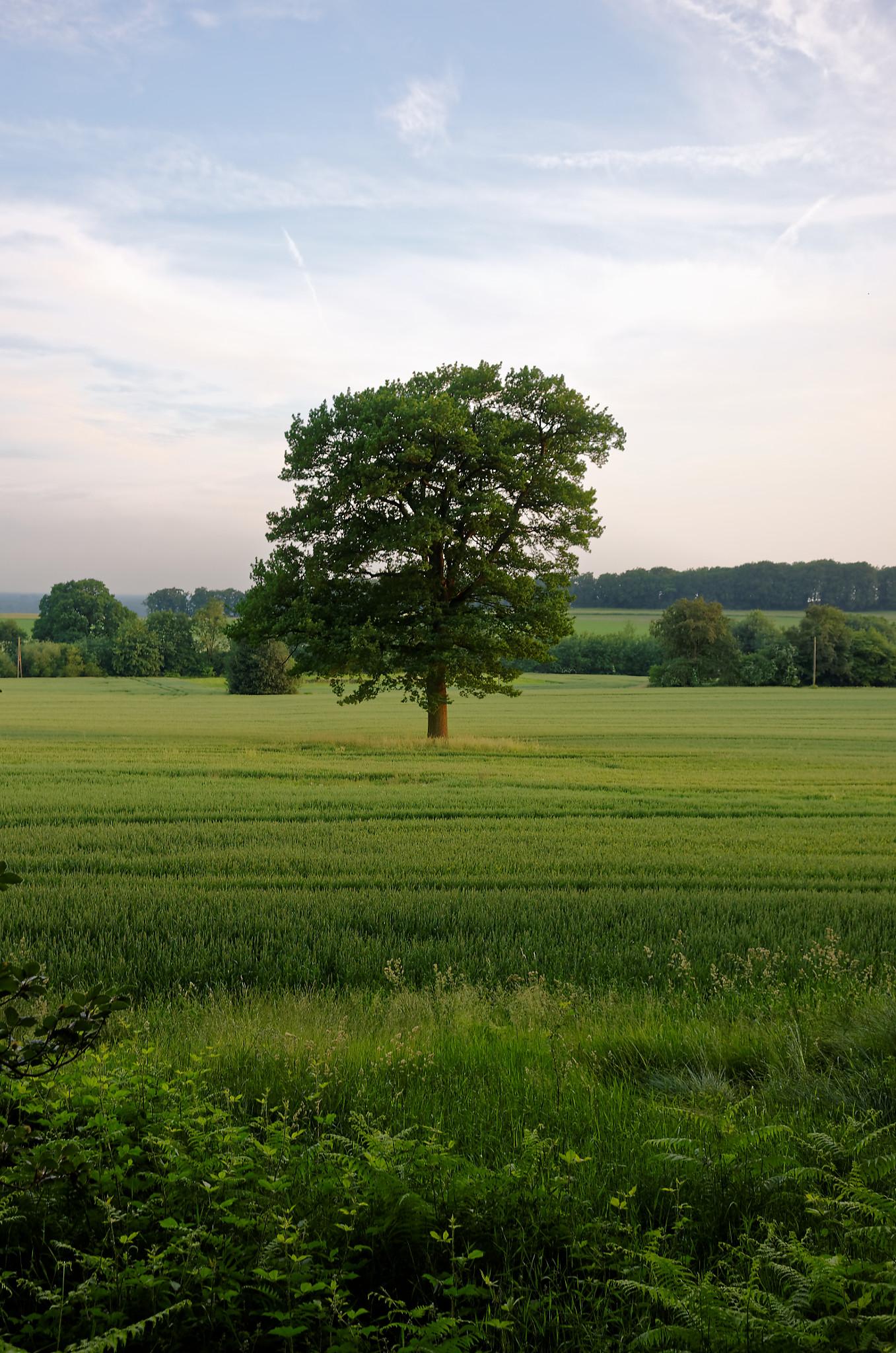 Brochterbeck Baum